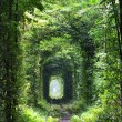 Tunnel of love — Stock Photo #11903257