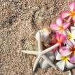 Starfish and leelawadee flower on the sand - Stock Photo