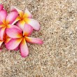 Pink Leelawadee flower on the white sand — Stock Photo #12108386