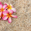 Pink Leelawadee flower on the white sand - Stock Photo