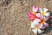 Pink Leelawadee flower on the white sand — Stock Photo