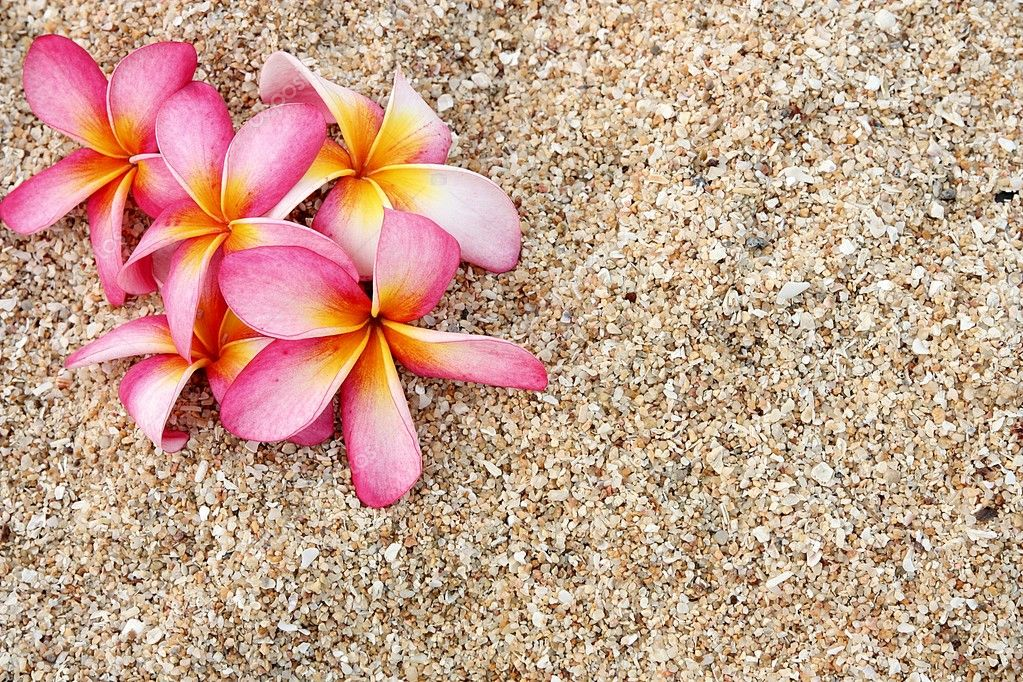 Pink Leelawadee flower on the white sand — Stock Photo ... Leelawadee
