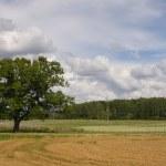 Lithuania summer land sky horizon — Stock Photo #11338268