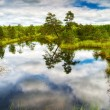 Beautiful wetland — Stock Photo #11577111