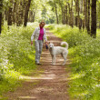 The woman walks with a dog in a wood — Stock Photo