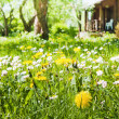 Stock Photo: Lawn with flowers in garden