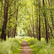 Path in a sunny summer forest - Stock Photo