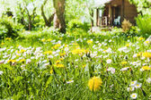 Lawn with flowers in the garden — Stock Photo