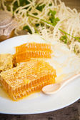 Honeycomb with daisies on white plate — Stock Photo