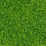 textura de folhas verdes — Vetorial Stock