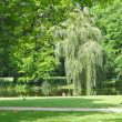 Stock Photo: Pond in a city park. Summer silence