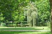 Estanque de un parque de la ciudad. silencio de verano — Foto de Stock