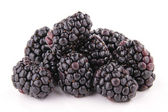 Isolated blackberry — Stock Photo