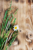 Herbs on the wood background — Stock Photo