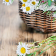 Stock Photo: Herbs and camomile in the basket