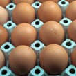 Row of Eggs — Stock Photo