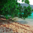 Surin island national park - Stock Photo