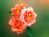 Bouquet yellow-orange rose — Stock Photo