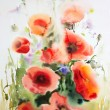 Original watercolor illustration of the poppies — Stock Photo