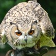 Crouched owl — Stock Photo #11628280