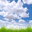 Fresh spring green grass against blue sky - Stock Photo
