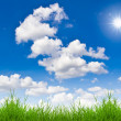 Stock Photo: Fresh spring green grass against blue sky
