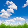Fresh spring green grass against blue sky — Stock Photo