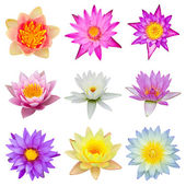 Collection of water lily isolated — Stock Photo