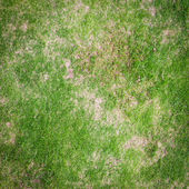 Green grass texture for background — Stock Photo