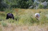 Das Baby-Pferd und das Pony sind Weiden — Stockfoto