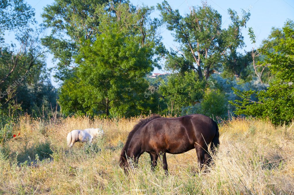 Grazing horses  Stock Photo #12247100