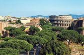 Colosseum, Rome - Italy — Stock Photo