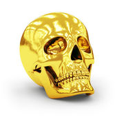 Skull — Foto de Stock