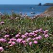 Stock Photo: Seview and coastal flowers