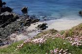 Mała zatoka na linii wybrzeża pembrokeshire — Zdjęcie stockowe