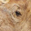 Close-up rhinoceros eye — Stock Photo