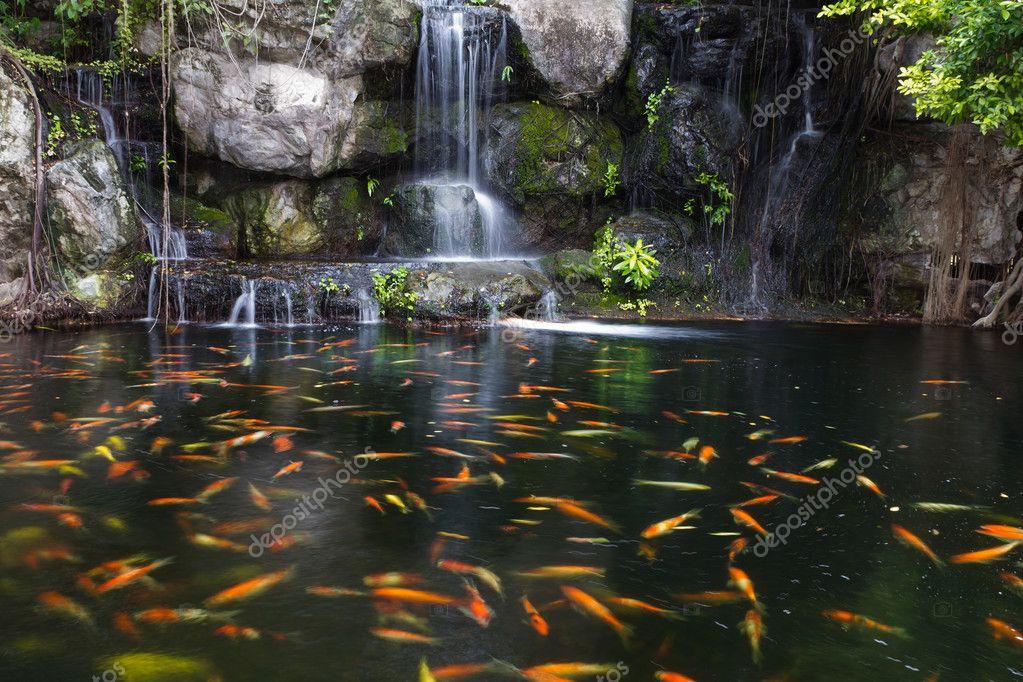 Pez koi en estanque en el jard n con cascada foto stock for Estanques de jardin prefabricados baratos