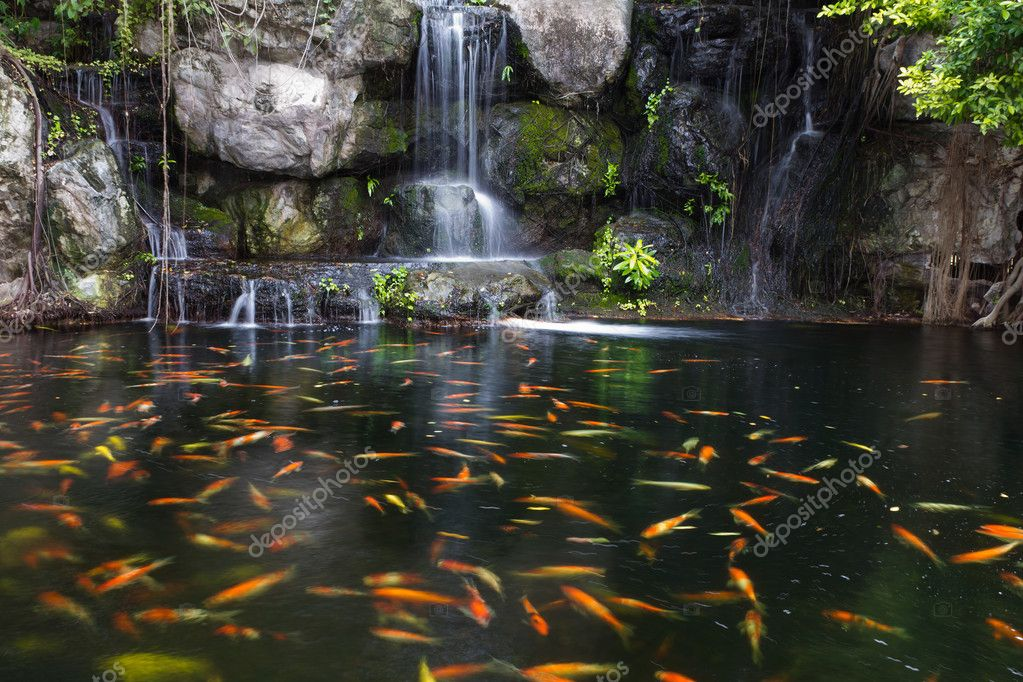 Pez koi en estanque en el jard n con cascada foto de for Plantas para estanque peces koi