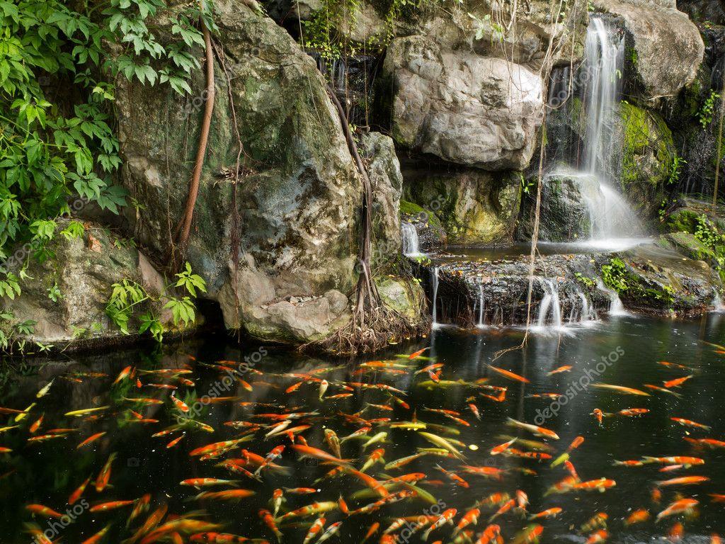 Pez koi en estanque en el jard n con cascada foto stock for Estanques para peces koi