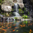 Stock Photo: Koi fish in pond at garden with waterfall