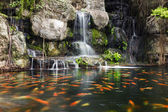 Koi fish in pond at the garden with a waterfall — Stock Photo