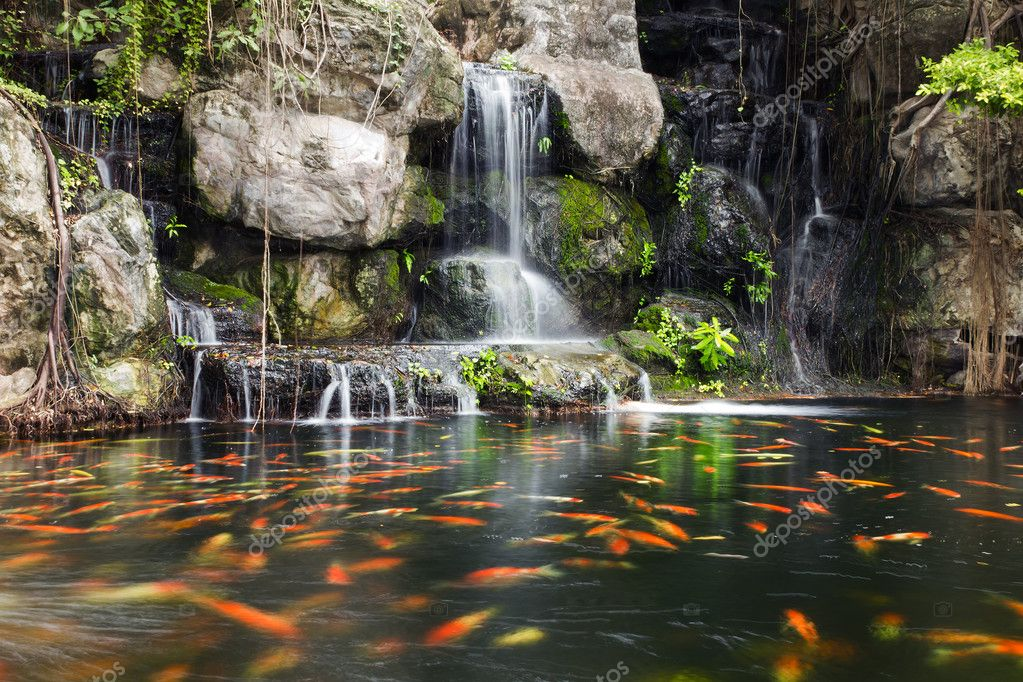 Koi fish in pond at the garden with a waterfall stock for Koi pond price