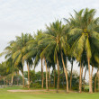 Coconut palms tree on the green field at golf club — Stockfoto