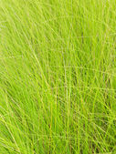 Line of green grass for background — Stock Photo