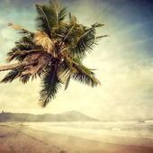 Grunge palm-8 — Stock Photo