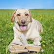 Dog reading rules from book — Stock Photo #11327478