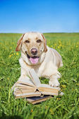 Dog reading rules from a book — Stock Photo