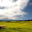 Hawaii Farmland — Stock Photo