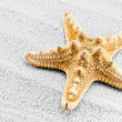 Seastar. — Stock Photo