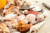 Seashells. — Stockfoto